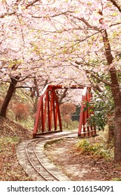 cherry blossoms and iron bridge