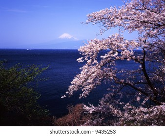 Cherry blossoms with Mount Fuji