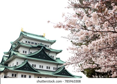 Cherry blossoms and Nagoya jo castle in Japan