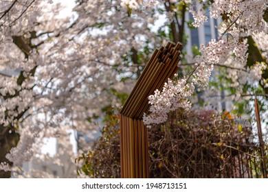 Cherry blossoms at Nogi Shrine in Akasaka, Minato-ku, Tokyo - Shutterstock ID 1948713151