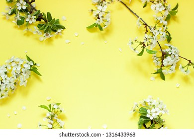 Cherry blossoms on the branch on the yellow background. Copy space