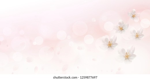 Cherry blossoms (pink blurred background)