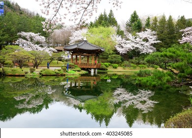 Cherry blossoms with a pond