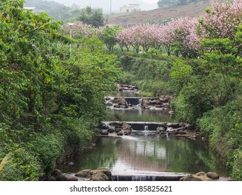 Cherry blossoms and  river.