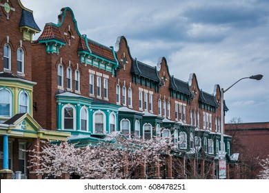 Cherry blossoms and row houses on Calvert Street in Charles Village, Baltimore, Maryland.