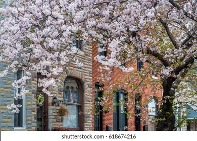 Cherry blossoms and row houses in Patterson Park, Baltimore, Maryland.
