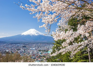 Cherry blossoms or Sakura and Mountain Fuji in spring season