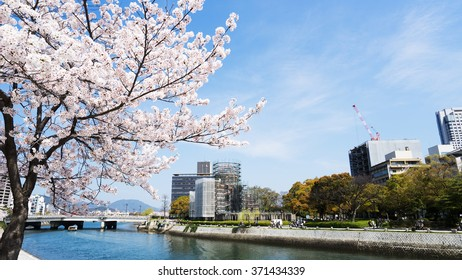 Cherry blossoms or Sakura and river at Hiroshima