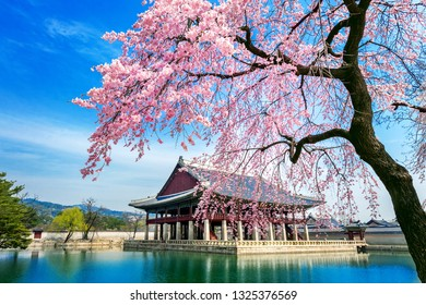 Cherry blossoms in spring, Seoul in Korea.