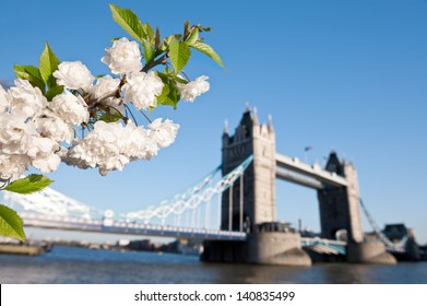 Cherry blossoms with Tower bridge in the backdrop, shallow DOF