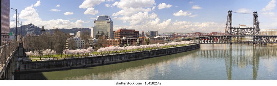 Cherry Blossoms Trees Along Portland Oregon Waterfront Willamette River with Historic Bridges in Spring Season Panorama