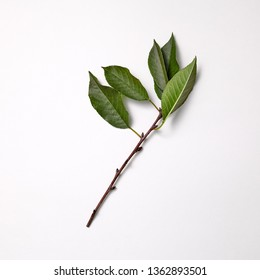 Cherry branch with green leaves on a gray background with copy space. Spring concept. Top view