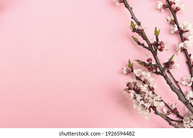 Cherry branch with white blooming flowers. Tender photo with a branch of blooming cherry with white flowers and green leaves on a pink background. Place for text or logo. Flat lay. Spring time. - Shutterstock ID 1926594482