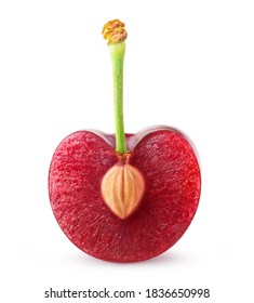 Cherry half with kernel on a short stem isolated on white background