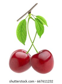 Cherry on branch isolated on white background, with clipping path