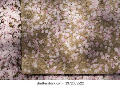 Cherry petals deposited on a stone