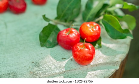 Cherry Thai or Acerola cherries fruit on the tree, high vitamin C and antioxidant fruits. Selective focus.
