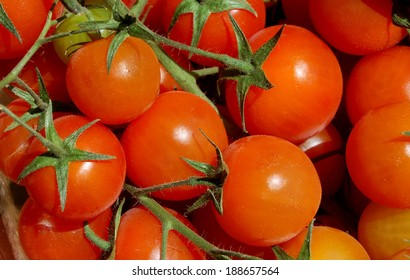 cherry tomatoes on branches - natural light