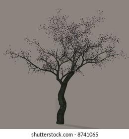 A cherry tree.