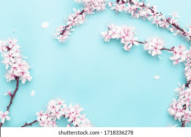 Cherry tree blossom. April floral nature and spring sakura blossom on soft blue background. Banner for 8 march, Happy Easter with place for text. Springtime concept. Top view. Flat lay.
