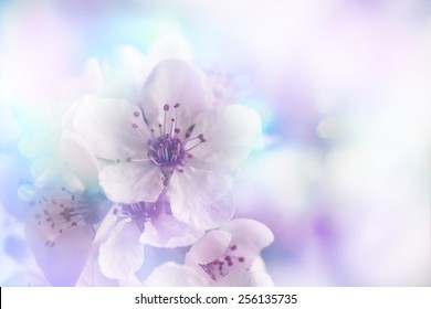 Cherry tree Blossom over nature background/ Spring flowers/ Spring bloom Background, romantic white flowers