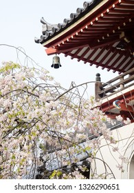 Cherry tree blossoming at the entrance to Anrakuji, temple number 6 of Shikoku pilgrimage