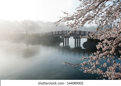 Cherry tree and bridge in the fog.