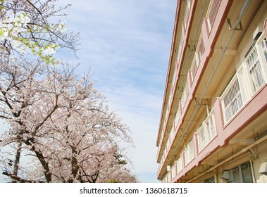A cherry tree and building