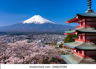 cherry tree and mount fuji