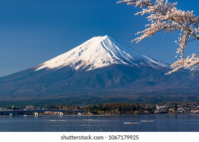 cherry tree and mount fuji in spring time