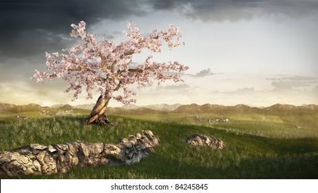 cherry tree on grassland