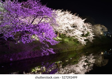 cherry tree and river