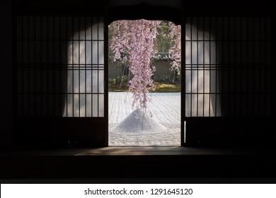Cherry tree seen through the window