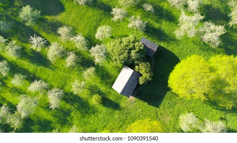Cherry trees in blossom aerial view. Small summer house with green back yard from above.