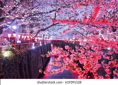 Cherry trees at Meguro River at night