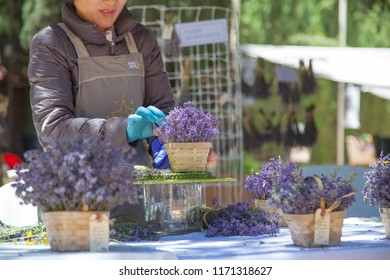 Cherry Valley, California, USA. 06/17/2018     Lady making arrangements with lavender flowers on an outdoor table in the summer during the Lavender Festival in Hightland Springs Ranch & Inn