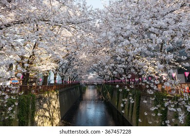 Cherry-blossom (or Sakura) trees at Meguro riverside. Meguro river is a very famous and popular Cherry-blossom viewing spot in Tokyo.