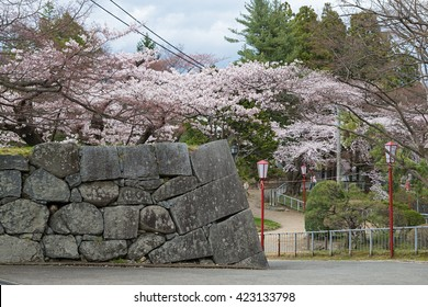 The Cherry-blossom trees in Iwate park (Morioka castle site park). This park is a very famous and popular Cherry-blossom (Sakura) viewing spot in Iwate prefecture,Japan