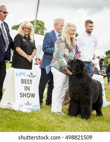 Cheshire, England - June 22 2016. Young woman is presented with  rosette as her Newfoundland dog wins best in show, at the Royal County Cheshire Show, England, UK.