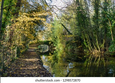Chesterfield canal Autumn morning reflecting in the waters surface in North Nottinghamshire,UK.