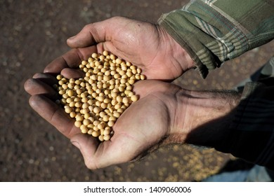 Hands Holding Soybeans Images, Stock Photos & Vectors