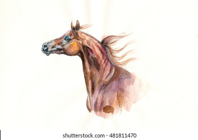 chestnut arabian horse watercolor portrait