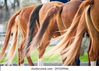 chestnut don horses tales closeup