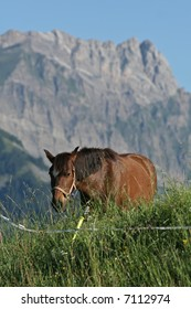 A chestnut horse approaches on an lush green alpine pasture, against a craggy granite peak in the background.