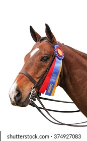 A chestnut horse with a blue and red ribbon on white background