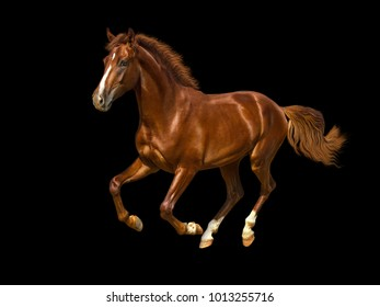 Chestnut horse cantering freely.