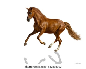 Chestnut horse is galloping freely.