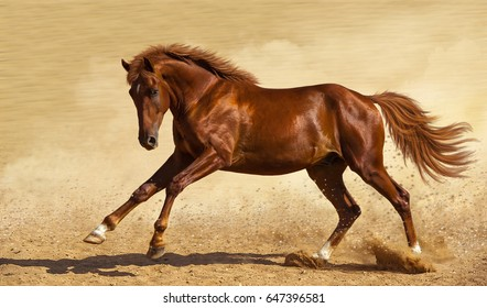 A chestnut horse gallops across the sand.