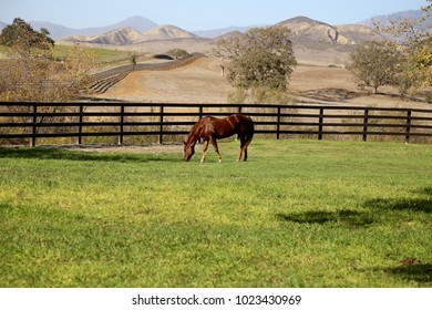 A chestnut  horse grazing in a very  lush pasture in the foreground and in the background a field and a fence row that goes as far as the eye can see come together to make a lovely landscape.