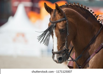 chestnut horse head closeup
